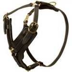 Padded Leather Mastiff Harness for Agitation Training