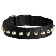 Exclusive Nylon Mastiff Collar with Awesome Nickel Cones
