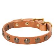 Leather Mastiff Collar with Brass Half-Ball Studs