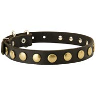 Leather Mastiff Collar with Brass Circles for Fashionable Walking