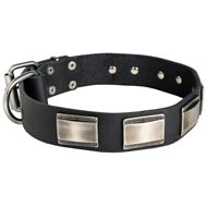Leather Mastiff Collar Massive Nickel Plates