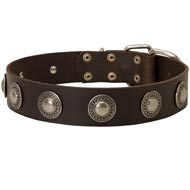 Leather Mastiff Collar Decorated with Silver Conchos