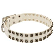 White Leather Mastiff Collar with Old Nickel Square Studs for Daily Dog Walking - NEW OFFER