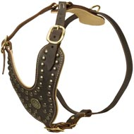 Royal Design Leather Mastiff Harness with Brass Studs