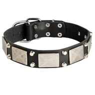 Leather Mastiff Collar Decorated with Nickel Cones and Plates