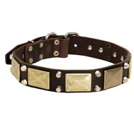 Leather Mastiff Collar with Studs and Plates