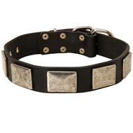 Leather Mastiff Collar with Large Nickel Plates