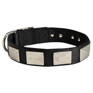 Nylon Mastiff Collar Massive Nickel Plates