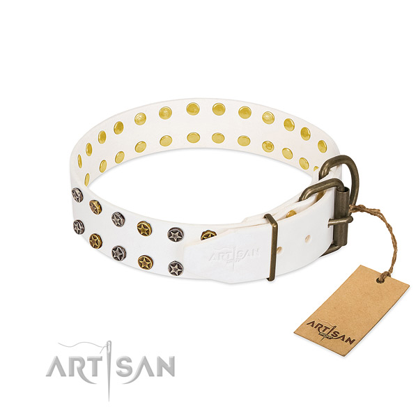Impressive leather dog collar with corrosion proof embellishments