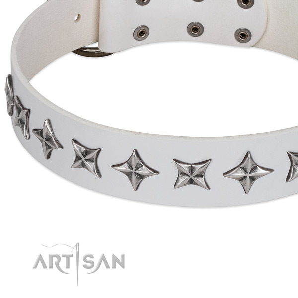 Daily walking studded dog collar of reliable genuine leather