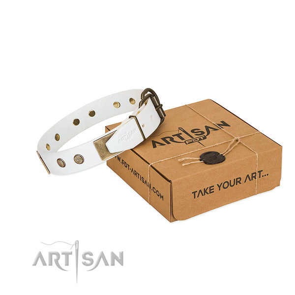 Reliable traditional buckle on dog collar for everyday use