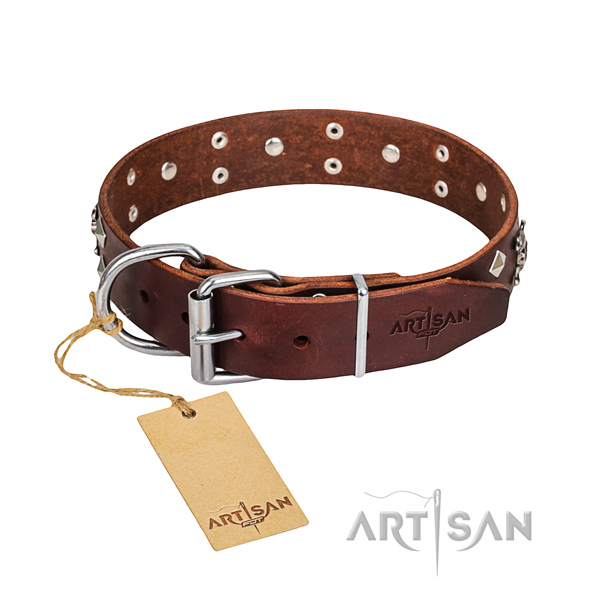 Everyday walking dog collar of fine quality leather with embellishments