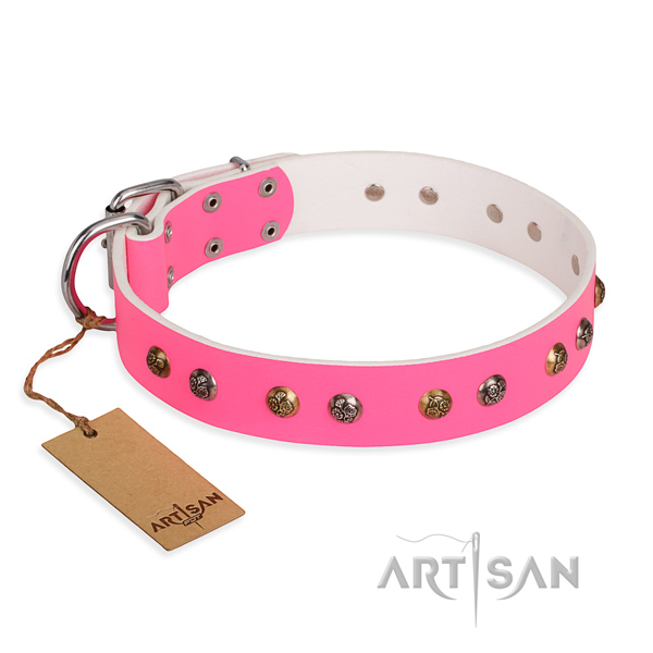 Everyday walking easy adjustable dog collar with rust-proof D-ring