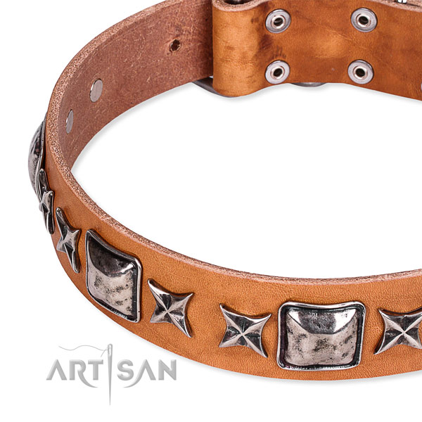 Everyday walking studded dog collar of finest quality full grain natural leather