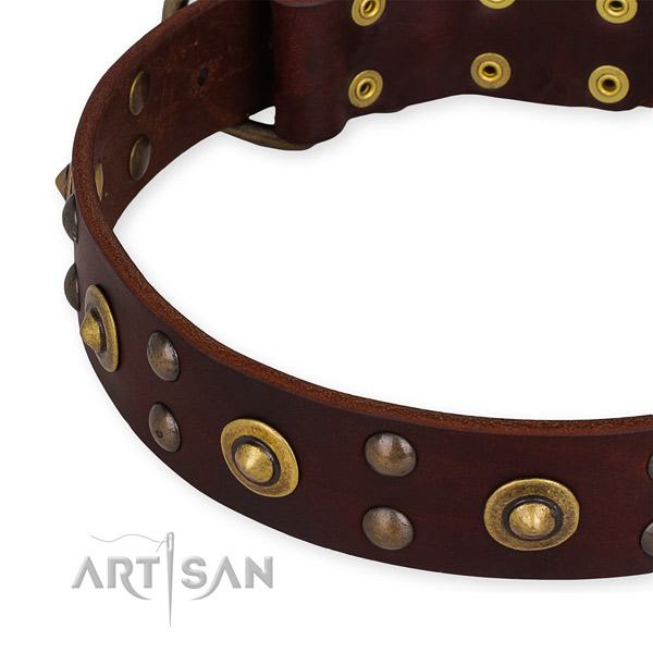 Genuine leather collar with rust-proof D-ring for your handsome canine