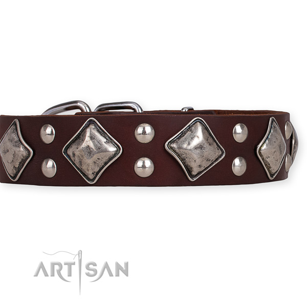 Natural leather dog collar with amazing rust-proof studs