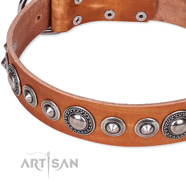 Walking adorned dog collar of top quality full grain natural leather