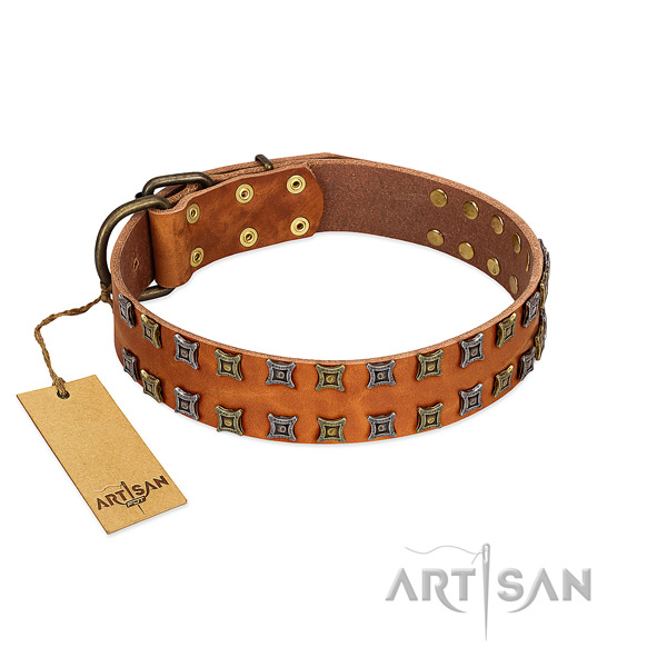 Reliable leather dog collar with adornments for your dog