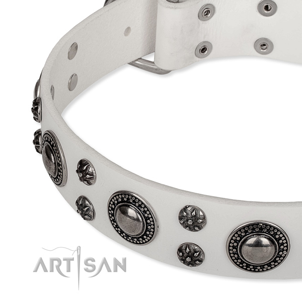 Walking studded dog collar of best quality leather