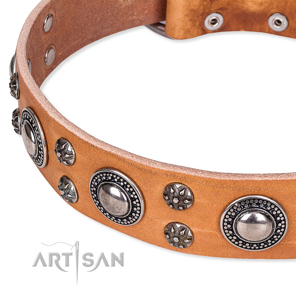 Comfy wearing studded dog collar of fine quality full grain natural leather