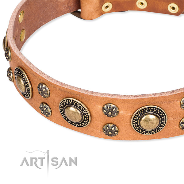 Everyday walking embellished dog collar of high quality full grain natural leather