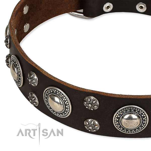 Everyday walking studded dog collar of strong full grain leather
