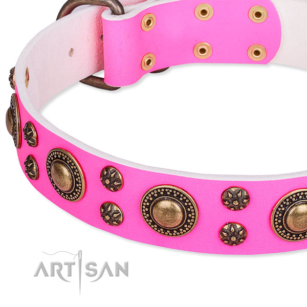 Fancy walking adorned dog collar of finest quality full grain leather