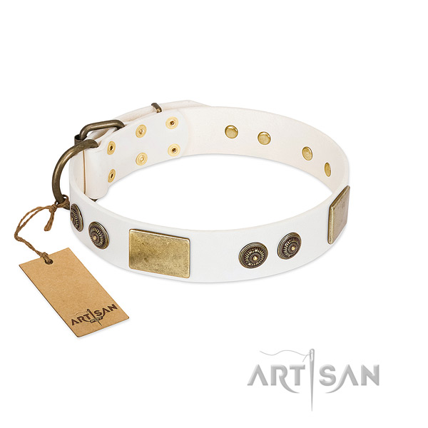 Studded leather dog collar for daily walking