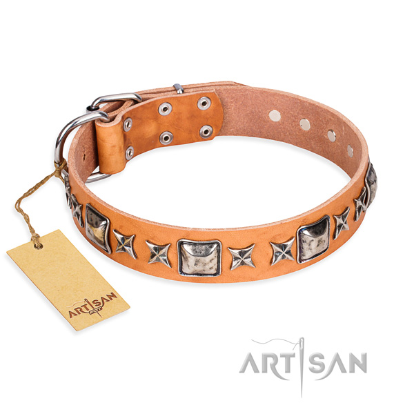 Stylish walking dog collar of quality natural leather with adornments