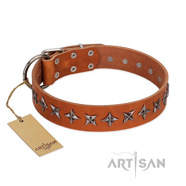 Daily walking dog collar of fine quality leather with embellishments