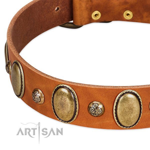 Leather dog collar with stylish design adornments