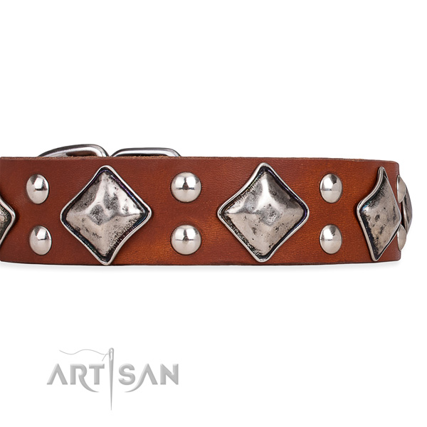 Full grain leather dog collar with trendy durable embellishments