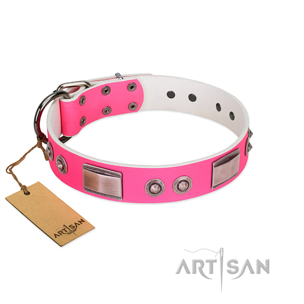 Fashionable dog collar of leather with adornments