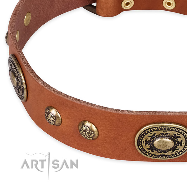 Unusual full grain leather collar for your attractive canine