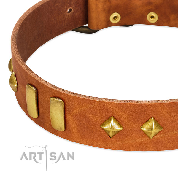 Comfy wearing natural leather dog collar with extraordinary embellishments