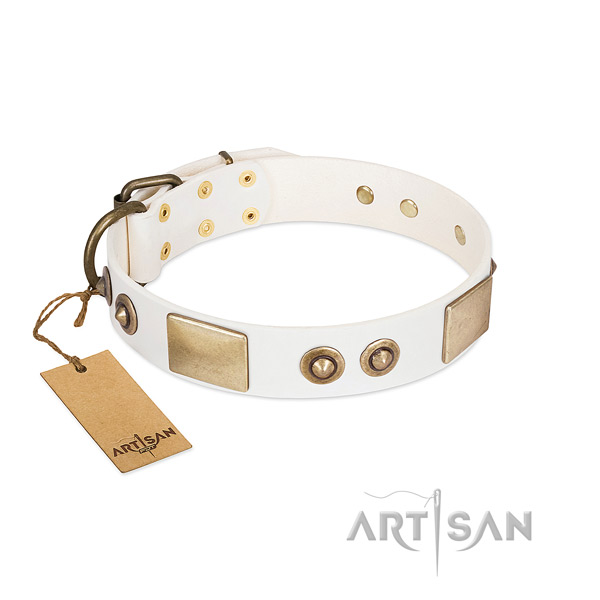 Corrosion resistant studs on leather dog collar for your pet