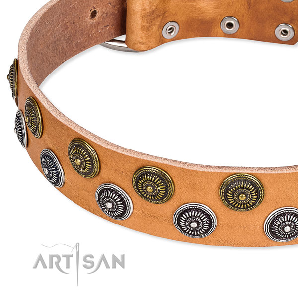 Everyday walking decorated dog collar of durable full grain genuine leather