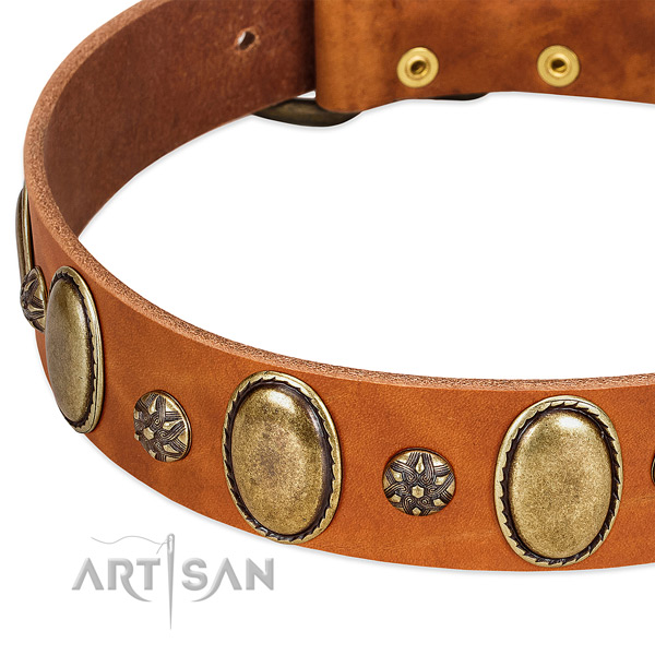 Daily walking top rate full grain natural leather dog collar