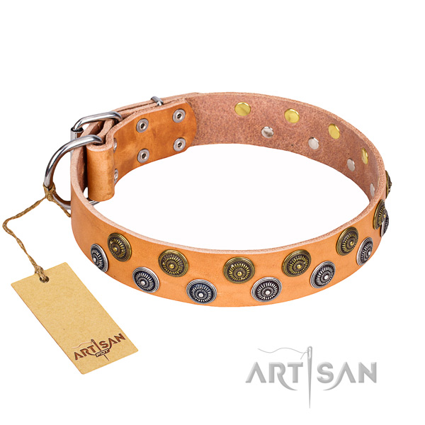 Everyday walking dog collar of fine quality genuine leather with adornments
