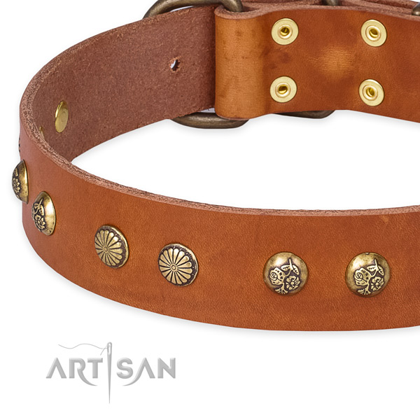 Full grain leather collar with corrosion resistant hardware for your beautiful four-legged friend