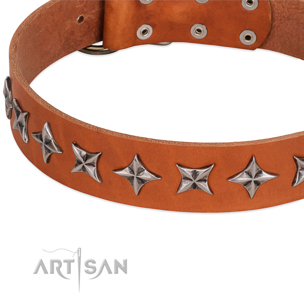 Comfy wearing studded dog collar of top quality full grain genuine leather