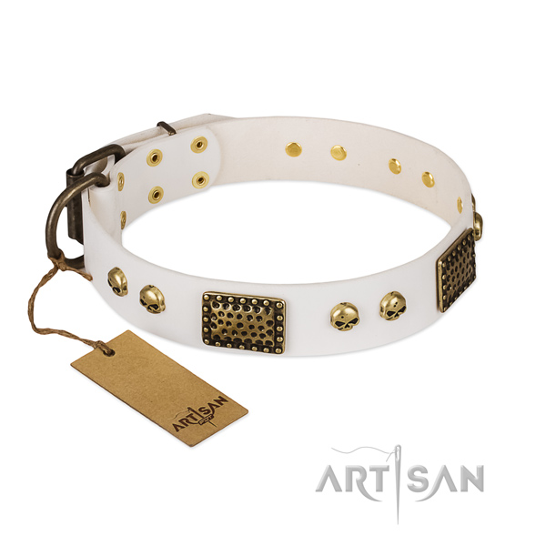 Strong fittings on everyday walking dog collar
