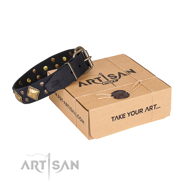 Stylish walking dog collar with Extraordinary durable studs