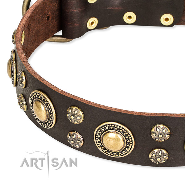 Fancy walking decorated dog collar of quality genuine leather