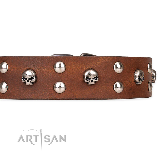 Comfy wearing decorated dog collar of reliable natural leather