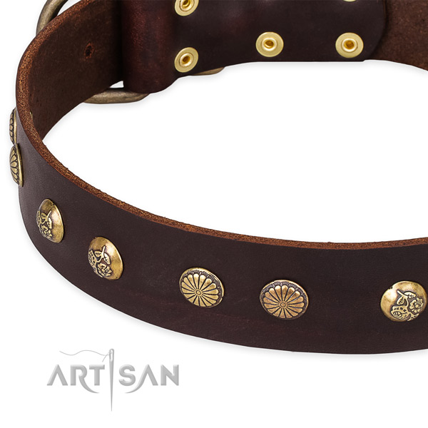 Full grain leather collar with rust resistant traditional buckle for your impressive four-legged friend