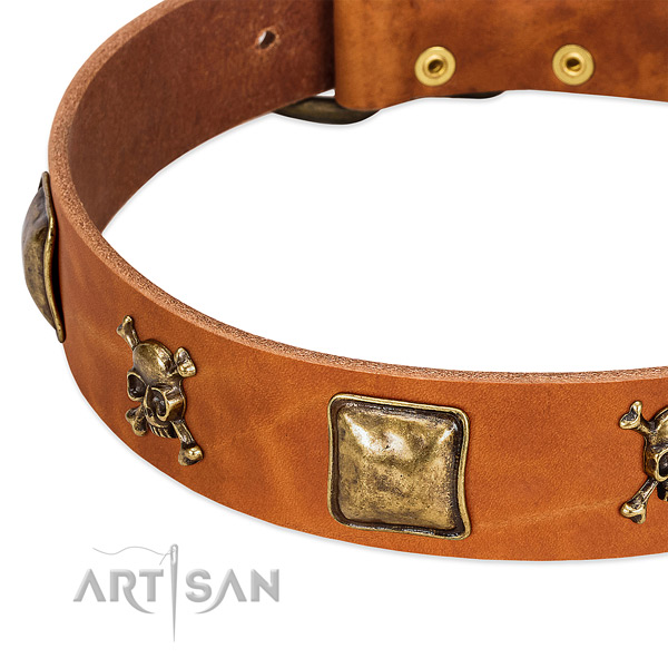 Extraordinary leather dog collar with durable embellishments
