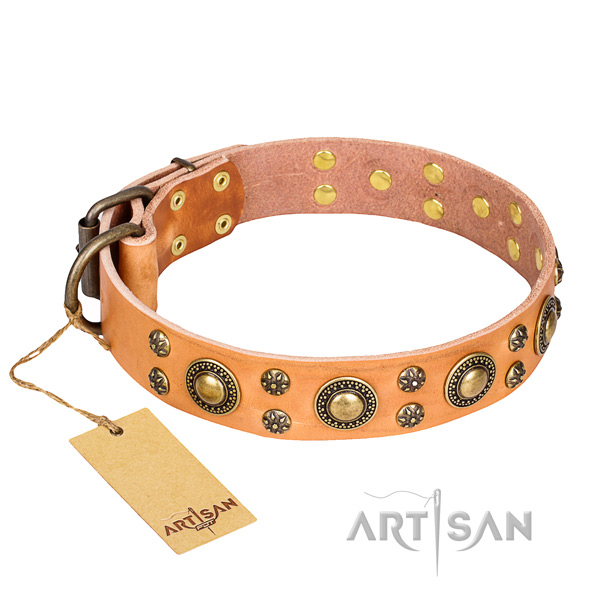 Fancy walking dog collar of fine quality full grain leather with adornments
