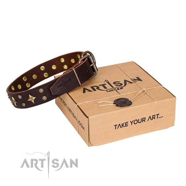 Daily walking dog collar of finest quality leather with studs