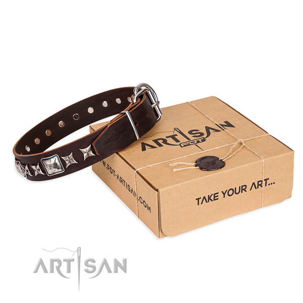 Fancy walking dog collar of high quality leather with adornments